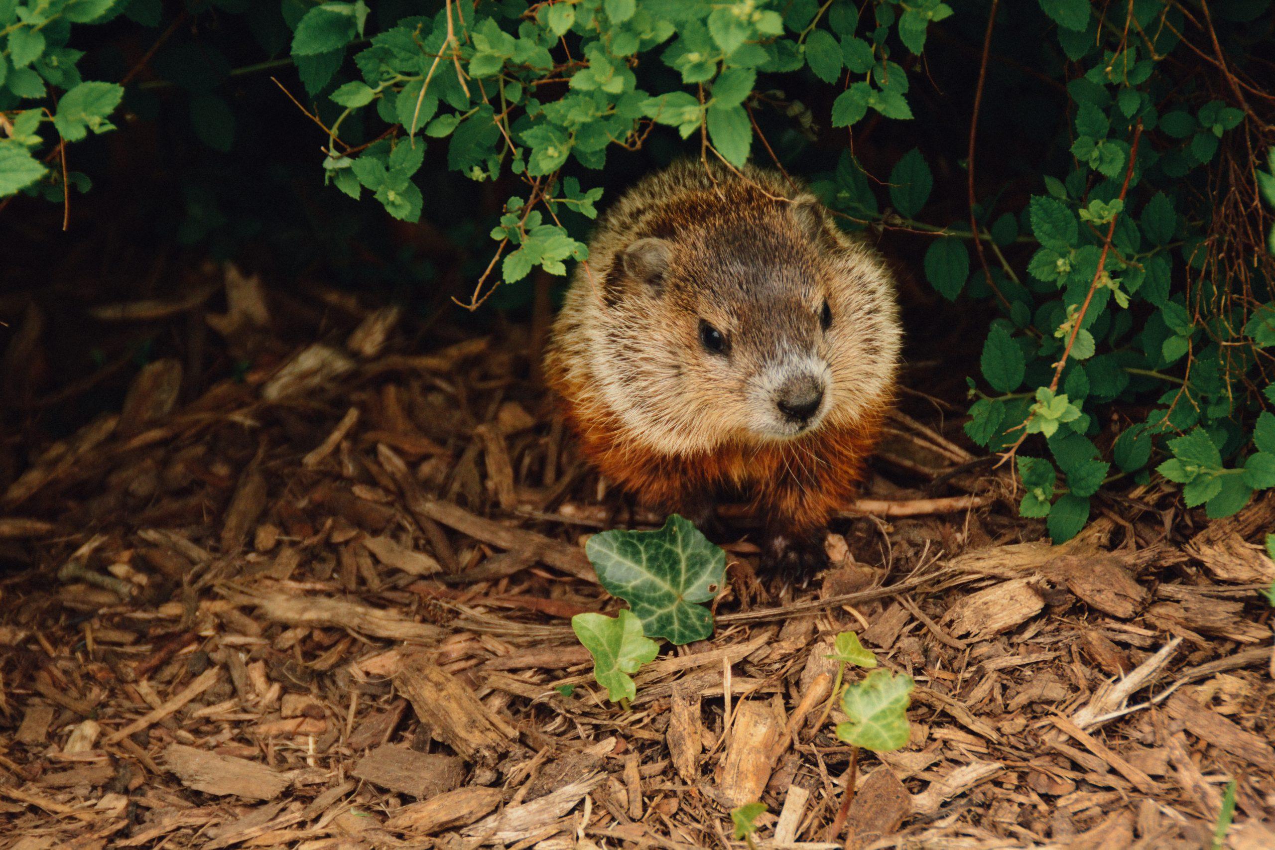 Episode 05 : The Groundhog